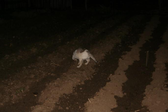 Iar când a fost totul gata, a venit pisica și a îngropat și ea ceva în pământ!
