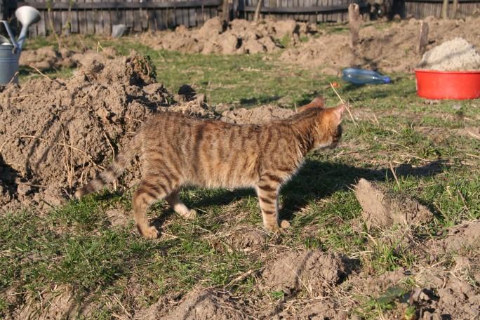 Pisicul a supravegheat activitatea