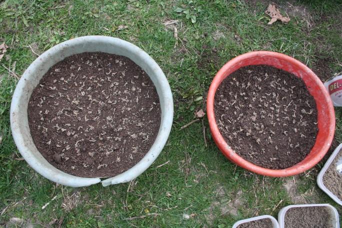 Semințele din lighean