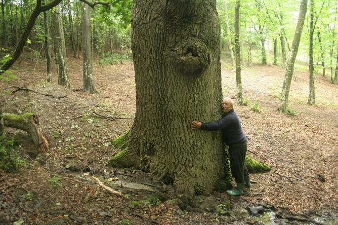 La copacul ăl gros