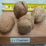 Nuci soiul Coenen