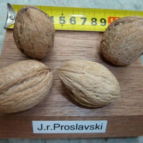 Nuci soiul Proslavski