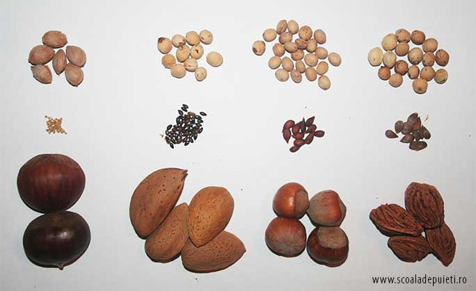Semințe libere