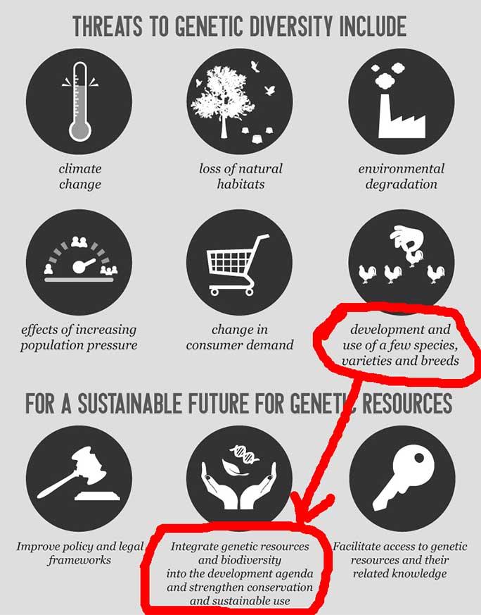 Decupaj infografic FAO