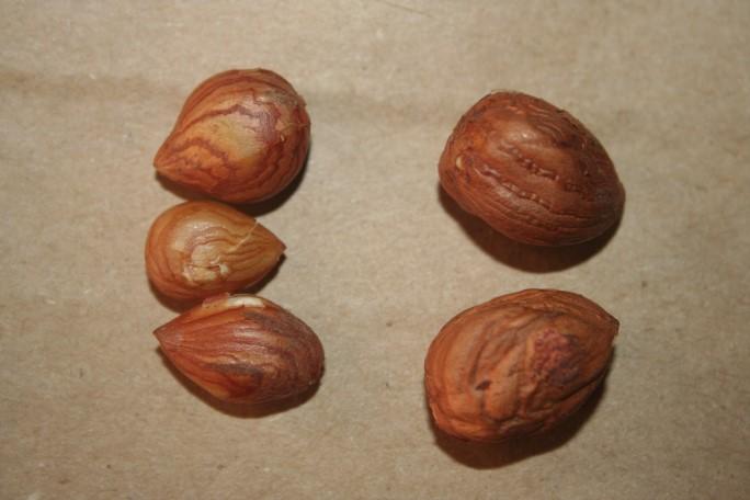 Miez alune turcesti (stanga) si alune de cultura (dreapta)