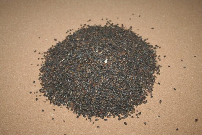 Semințe de salcam