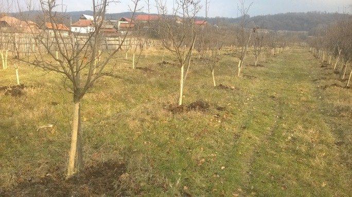 balegar-pentru-pomi-2